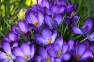 verandering lente vernieuwing